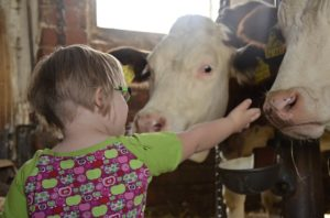 child and cow